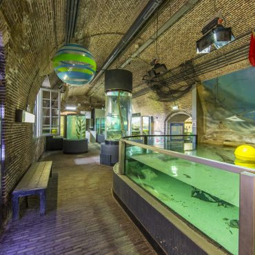 Fish feeding times and tours