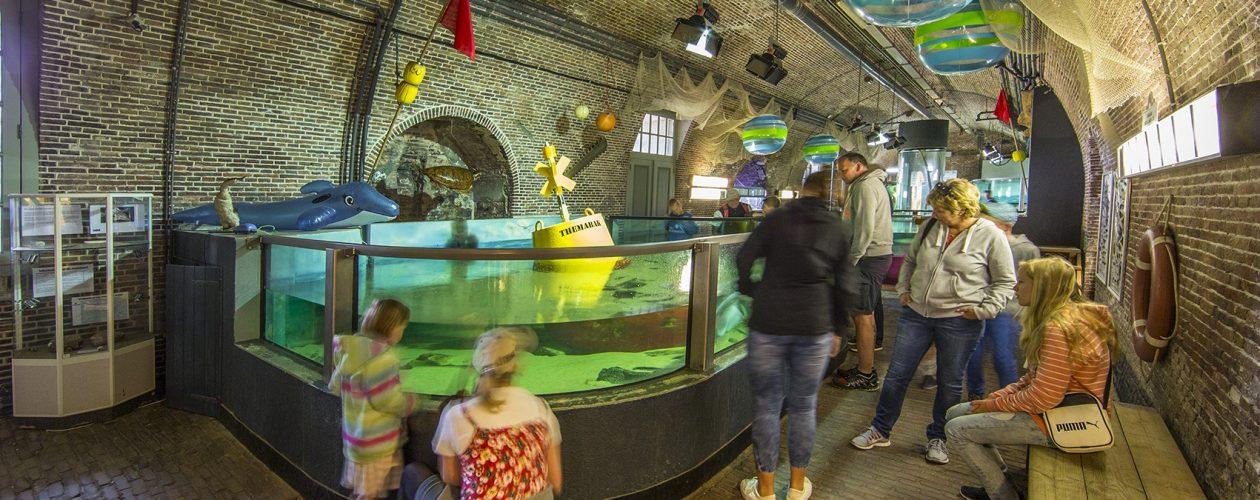 aquarium noordzee den helder haaien