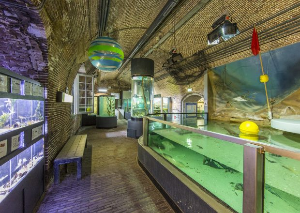 aquarium noordzee roggen